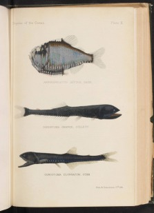 http://lhldigital.lindahall.org/cdm/ref/collection/nat_hist/id/47160
