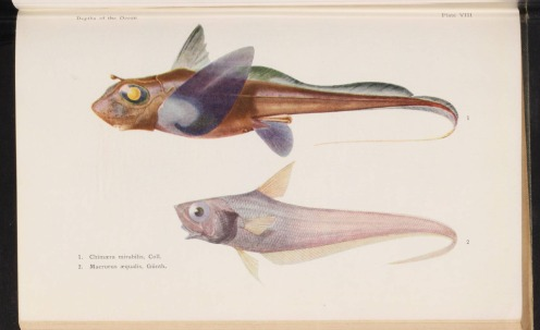 http://lhldigital.lindahall.org/cdm/ref/collection/nat_hist/id/47178